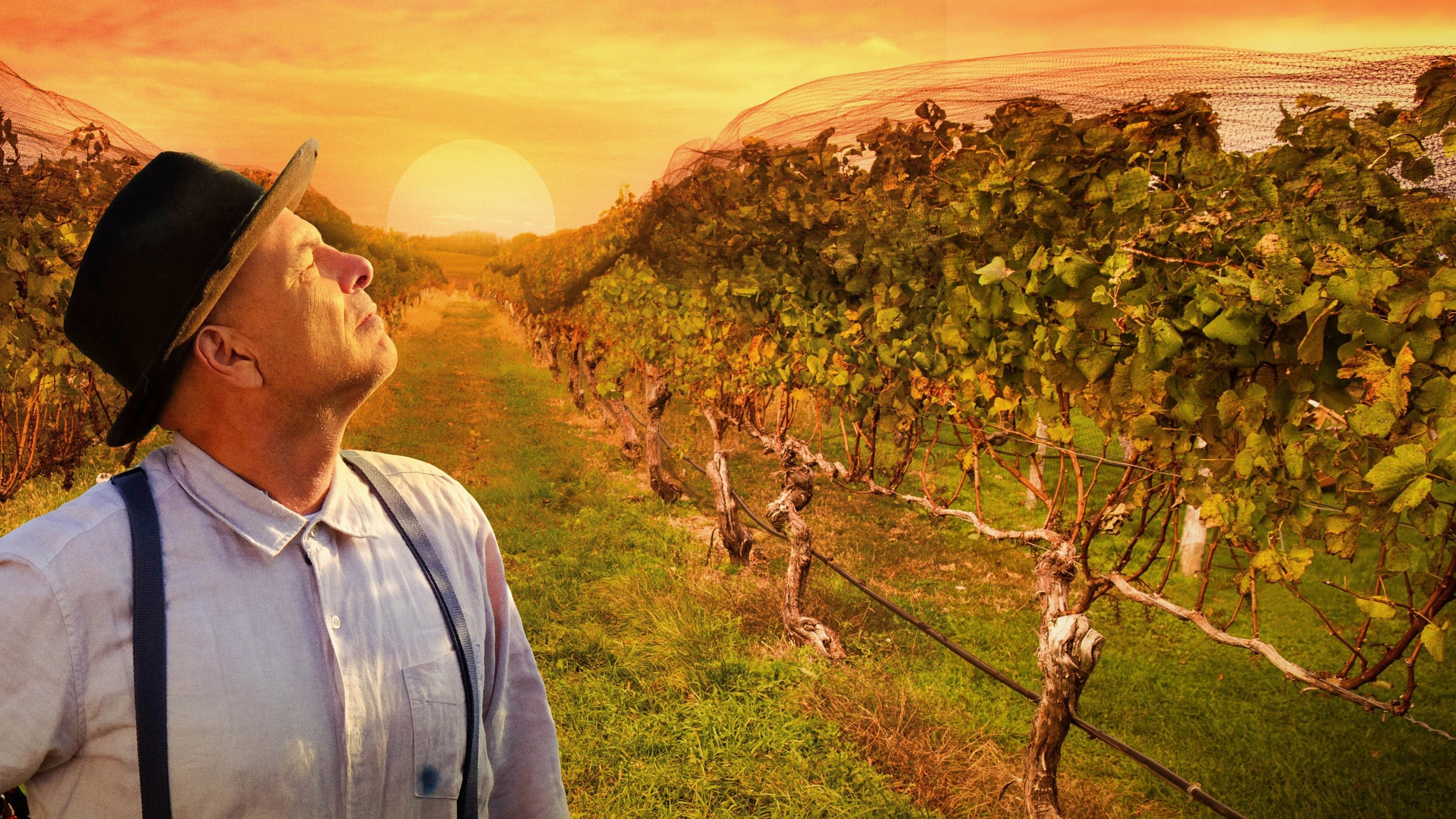 [Film review] From the Vine