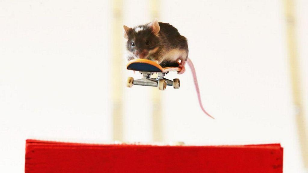 Mouse skateboarding